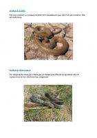 Reptiles et batraciens